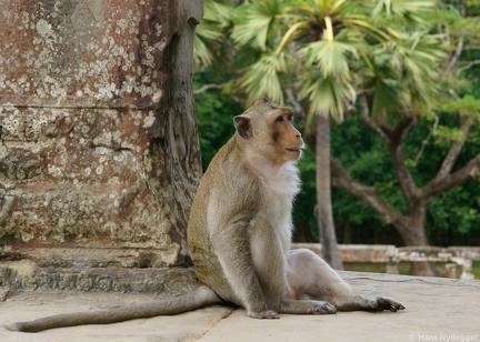 Angkor Wat Temple: resident